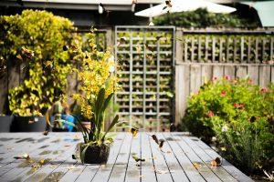 How Beautiful Garden Awnings Look Your Garden More Fancy?