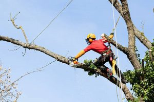 Best Tree Surgeons In Brentwood – To Keep Your Trees Healthy